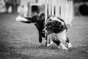 _dog_action