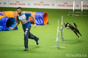 AWC Mondiali di Agility a Bologna: due passioni che interagiscono, fotografia e Agility Dog